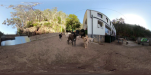Tell a Tail 360º: Immersive Storytelling on Animal Welfare